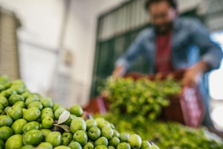 Solo le olive non bastano